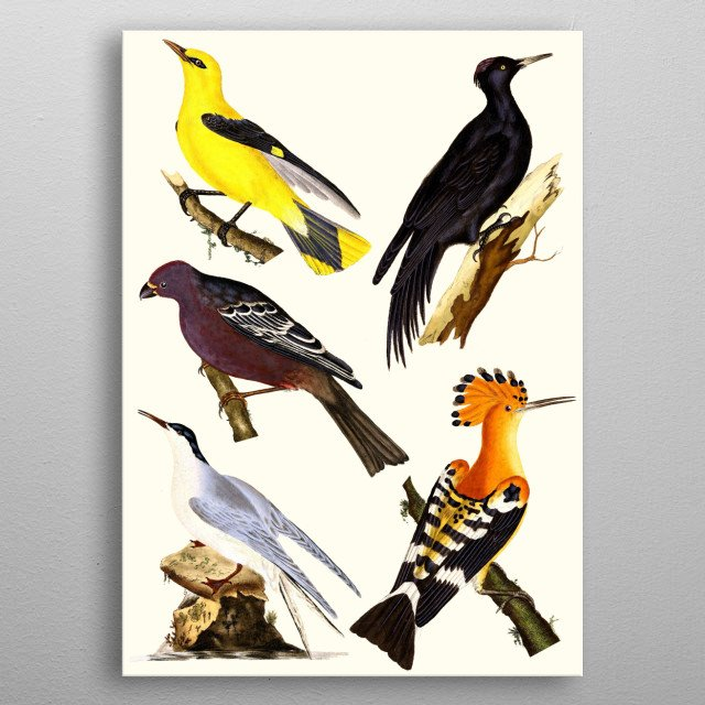 This hand-drawn illustration of a birds is perfect for animal & vintage lovers. Ideal for all types of  living room styles, metal poster