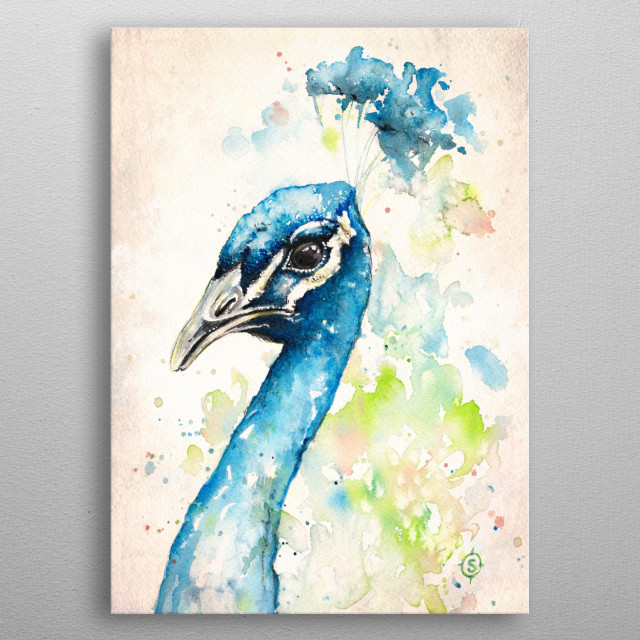 water colour peacock portrait by Sillier Than Sally metal poster