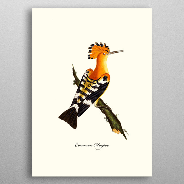 This hand-drawn illustration of a bird is perfect for animal & vintage lovers. Ideal for all types of  living room styles, metal poster