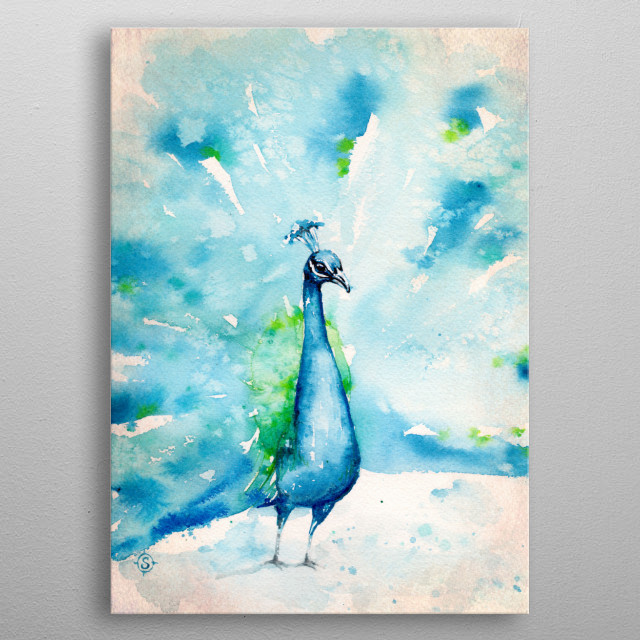 water colour painting of a peacock. metal poster