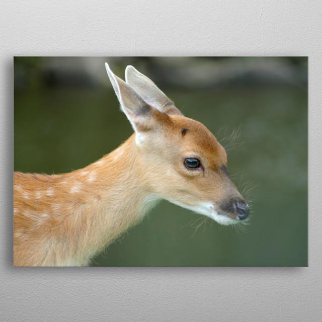 Beautiful young Mara fawn metal poster