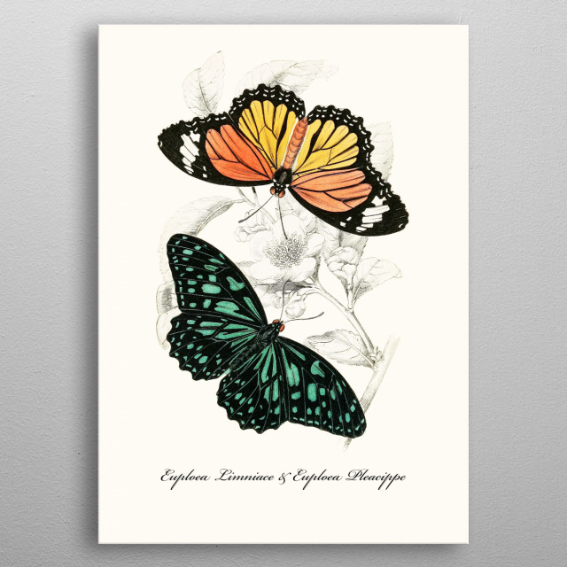 This hand-drawn illustration of a butterfly is perfect for animal & vintage lovers. Ideal for all types of living room styles, metal poster