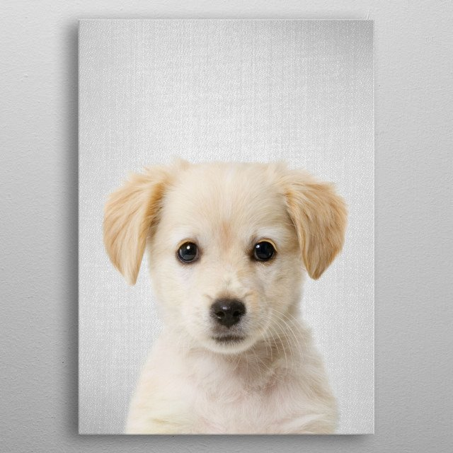 """Golden Retriever Puppy - Colorful.  For more colorful animals check out the collection in the main page of my shop """"Gal Design"""". metal poster"""