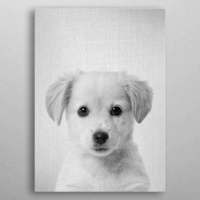 """Golden Retriever Puppy - Black & White.  For more black & white animals check out the collection in the main page of my shop """"Gal Design"""". metal poster"""