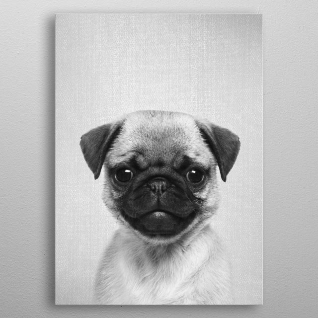 "Pug Puppy - Black & White.  For more black & white animals check out the collection in the main page of my shop ""Gal Design"". metal poster"