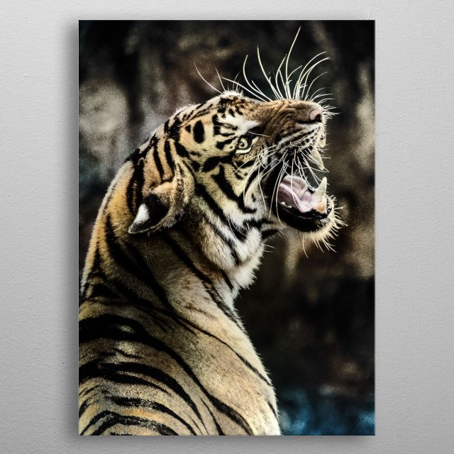 Tiger in gold dust. metal poster
