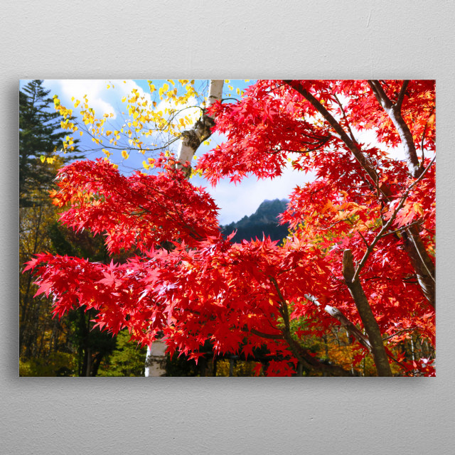 Momiji mountain Japanese alps metal poster