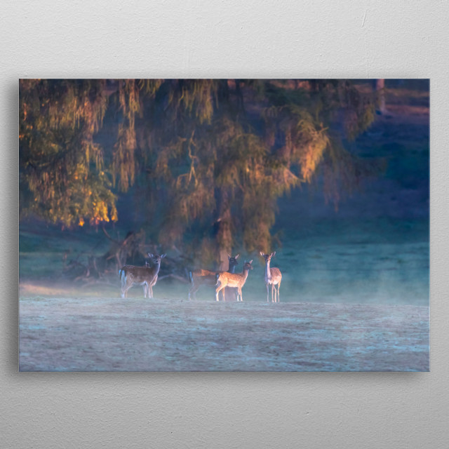 Group of fallow deer on misty slope early in the morning. metal poster