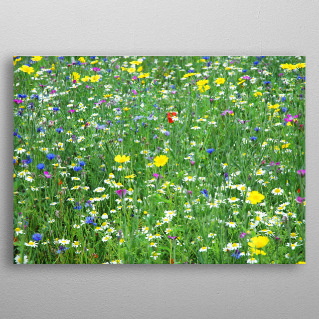 A whole field full of wildflowers in summer metal poster