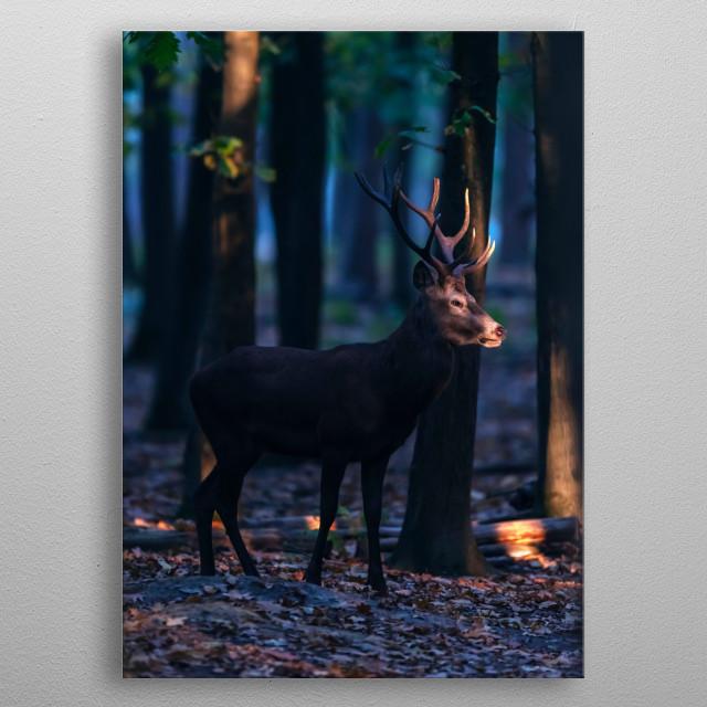 Red deer stag in sunlight in dark forest. metal poster