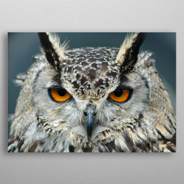 This is a photo of a gorgeous Bengal Eagle Owl with stunning orange eyes which I took at a country Fair at Kedleston Hall in Derbyshire. metal poster