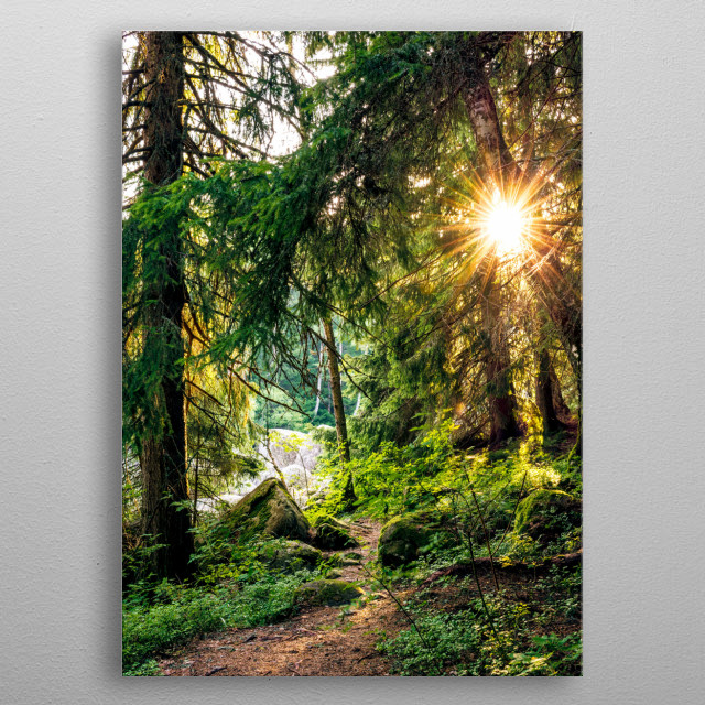 The rising sun peeks through the forest trees in the morning, creating a calm and inspiring atmosphere. metal poster