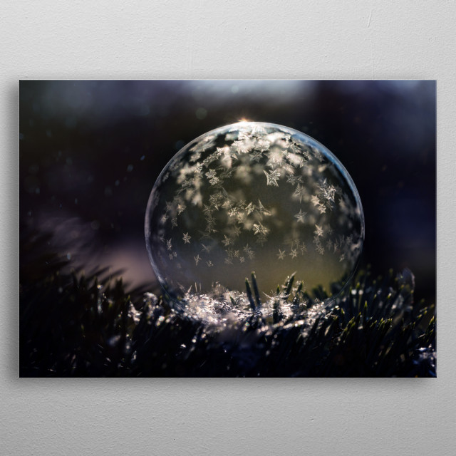 Closeup of a freezing soap bubble on the christmas tree branch. metal poster