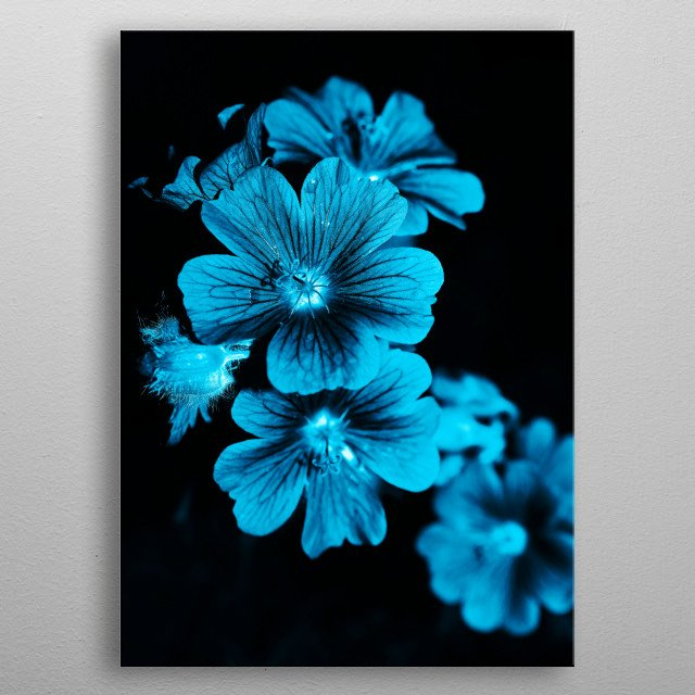 blue flowers woah metal poster