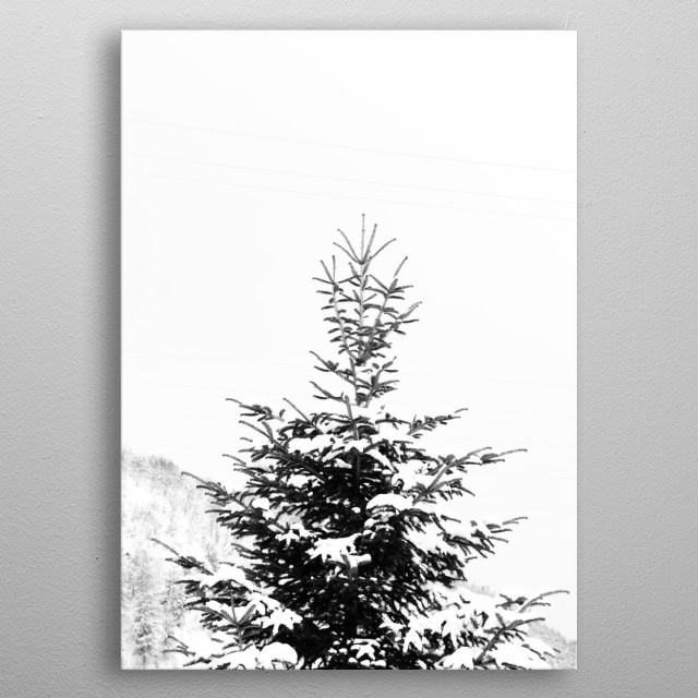 Black and white capture of a snow covered fir tree. metal poster