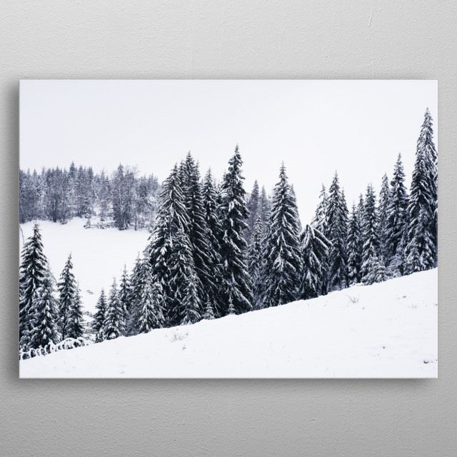 Photograph of pine trees growing on a snowy hill metal poster
