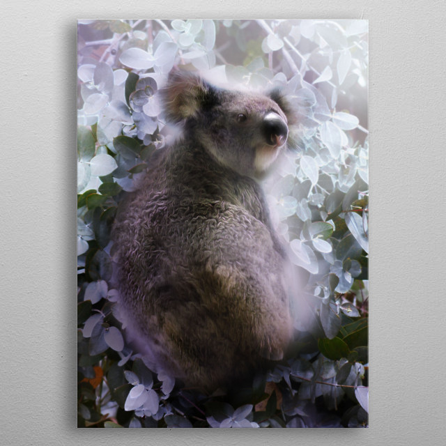 Koala with background of eucalyptus leaves. metal poster
