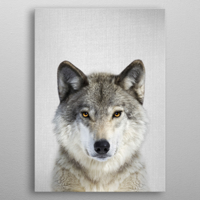 Wolf - Colorful.  For more colorful animals check out the collection in the main page of my shop Gal Design. metal poster