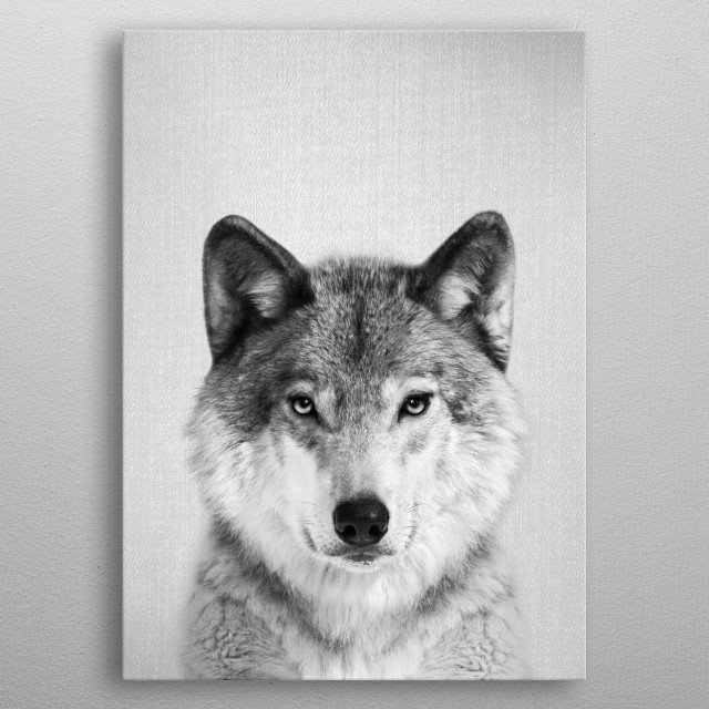 """Wolf - Black & White.  For more black & white animals check out the collection in the main page of my shop """"Gal Design"""". metal poster"""