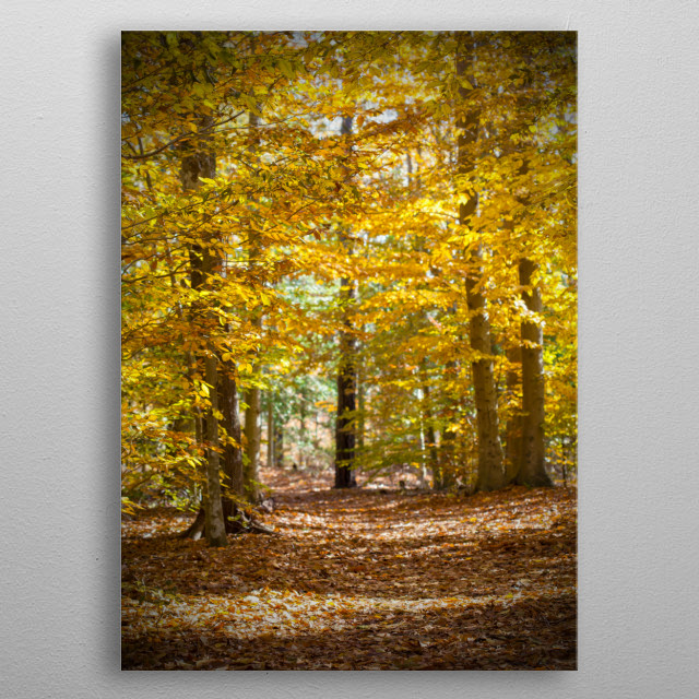I shot this fall forest so the branches in the foreground and leaves on the bottom are crisp those down the trail are slightly out of focus. metal poster