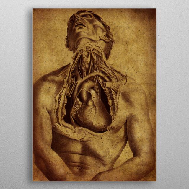 vintage anatomic poster metal poster