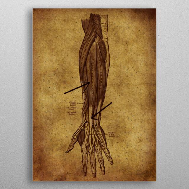 anatomic vintage poster  metal poster