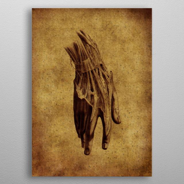 vintage anatomic illustration  metal poster
