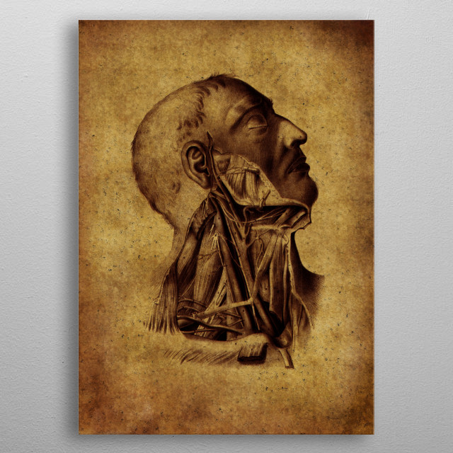 vintage anatomic illustration  metal poster