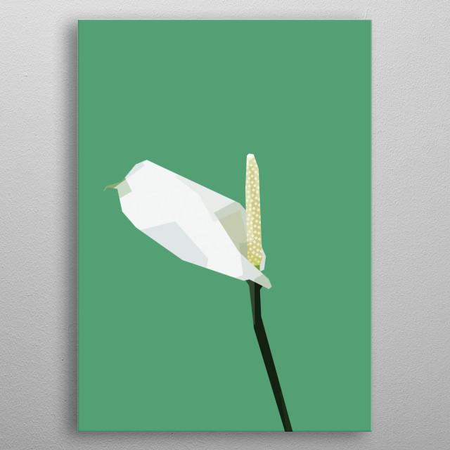 Spathiphyllum. metal poster