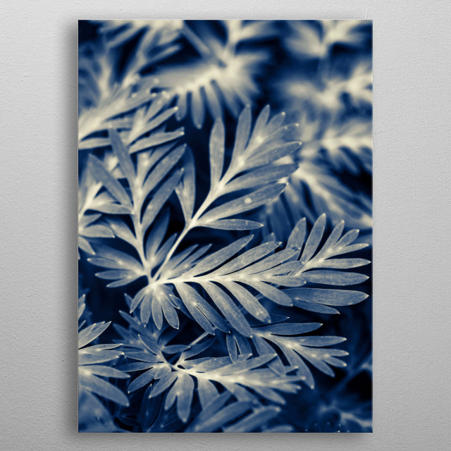 Dark navy blue leaves shot with a shallow depth of field, so some of the leaves are in sharp focus and others in soft focus.  metal poster