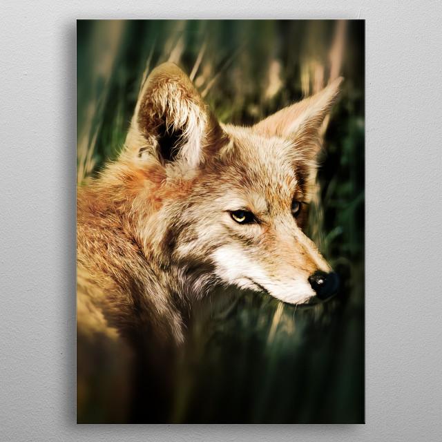Fox in woods, mischief and cunning in his look - metal poster