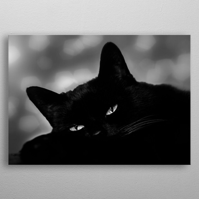 Beautiful black cat in rich classic black and white photography style. Look at her eyes always watching. Photography by Bob Orsillo.  metal poster