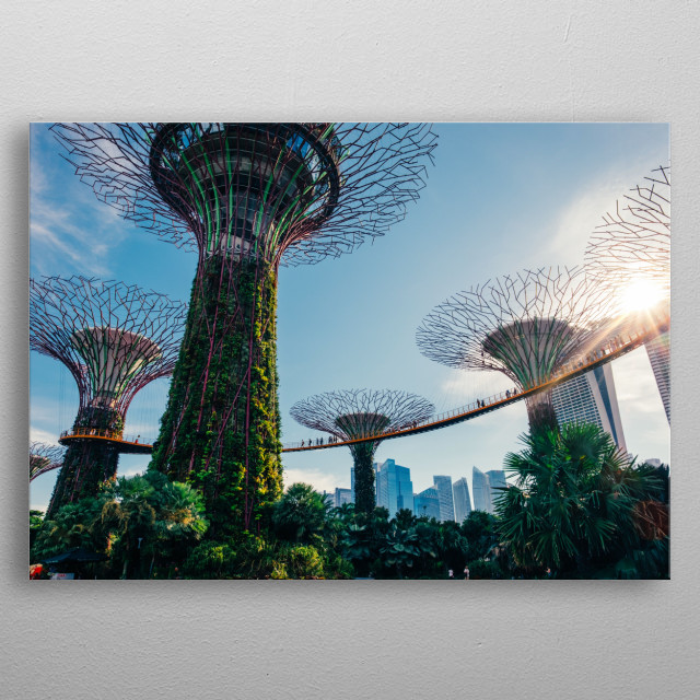 The supertrees towering over the landscape at Gardens by the Bay in Singapore. metal poster