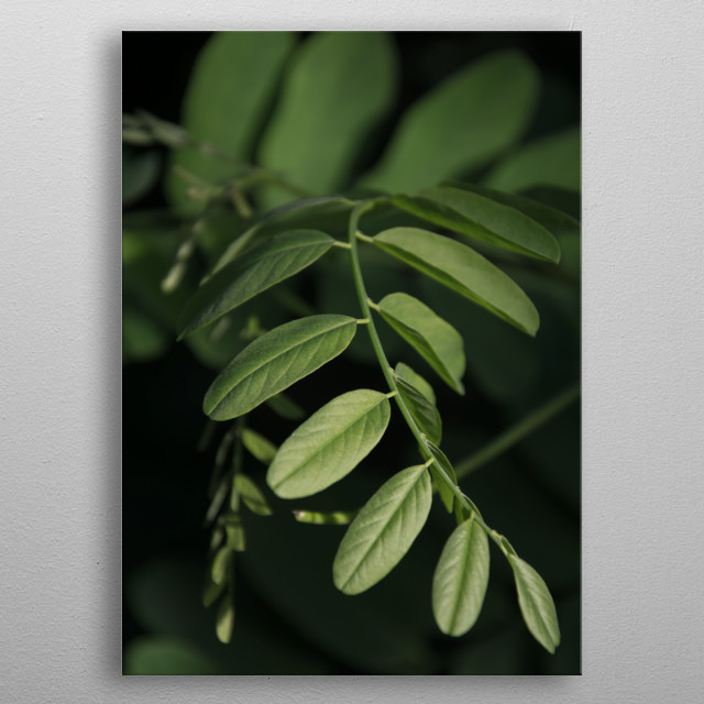 Vertical photography of green leaves on black background in the shape of spiral. metal poster