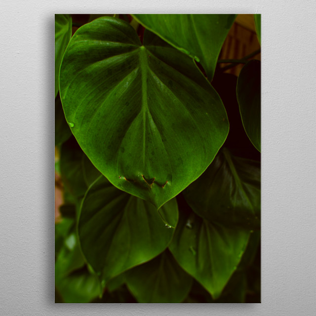 I love the shapes and textures of leaves. Their beauty and simplicity and many textures captivate me. metal poster
