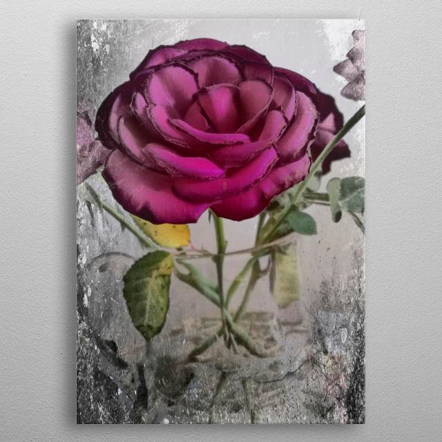 Fine art photograph of a pink rose, now fading, in a glass mug. metal poster