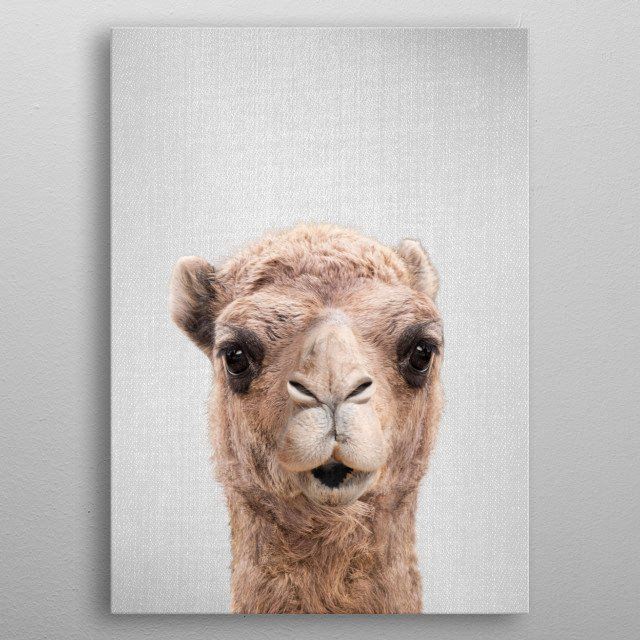 """Camel - Colorful.  For more colorful animals check out the collection in the main page of my shop """"Gal Design"""". metal poster"""