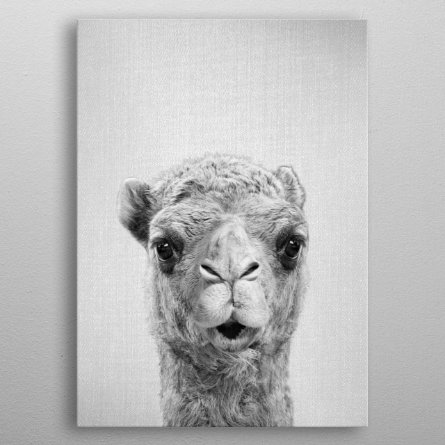 "Camel - Black & White.  For more black & white animals check out the collection in the main page of my shop ""Gal Design"". metal poster"