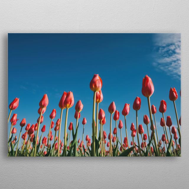 Flowers 44 metal poster