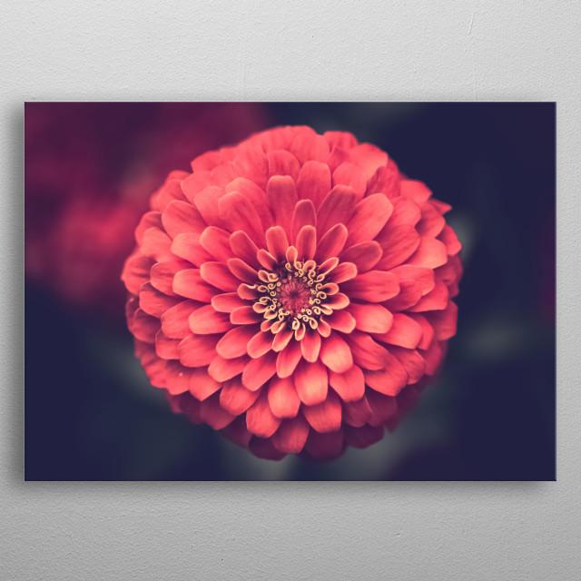 Flowers 57 metal poster
