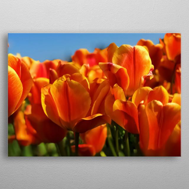 Flowers 58 metal poster