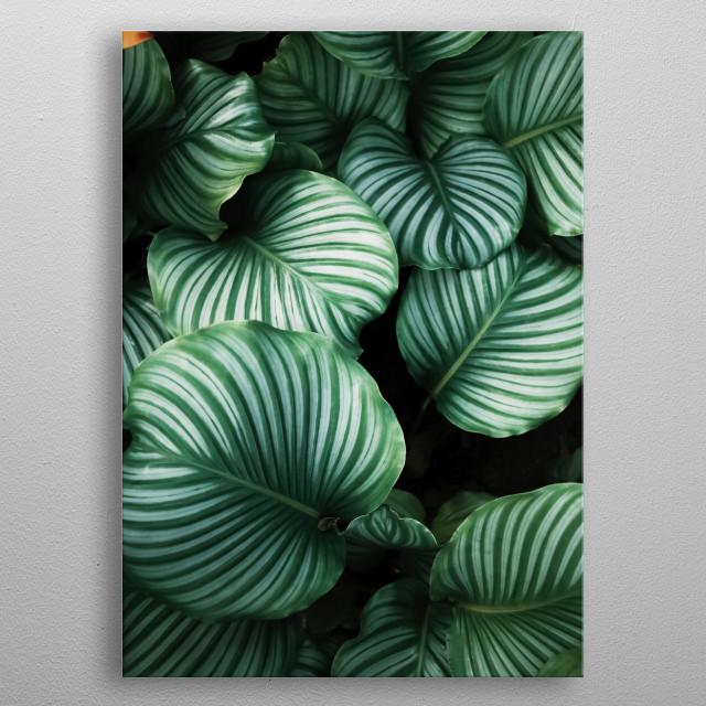 Plants 19 metal poster