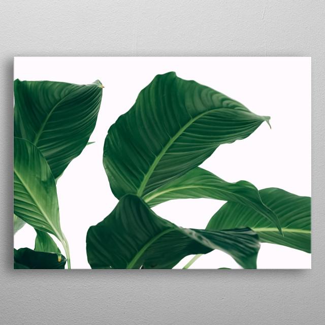 Plants 23 metal poster