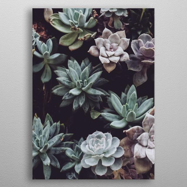 Plants 47 metal poster