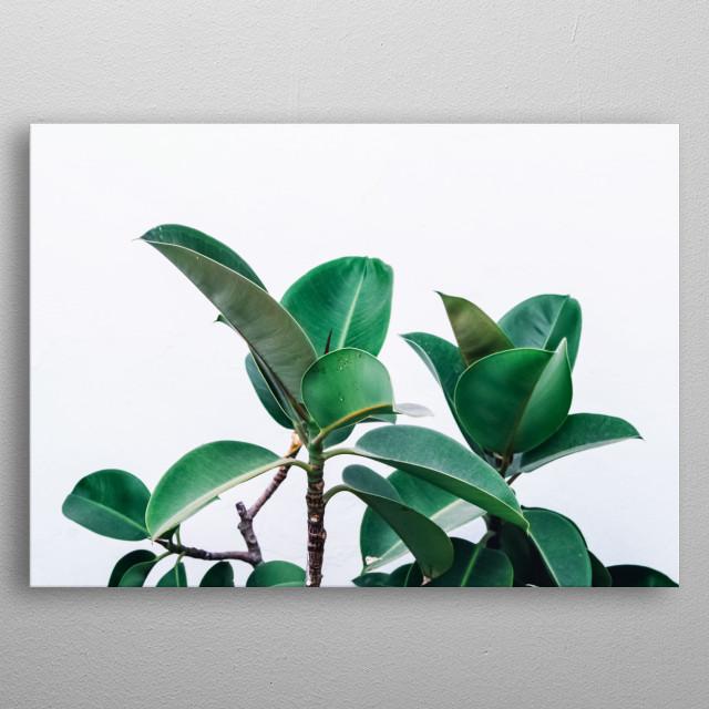 Plants 10 metal poster