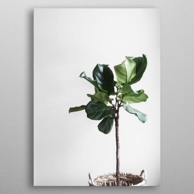 Plants 24 metal poster