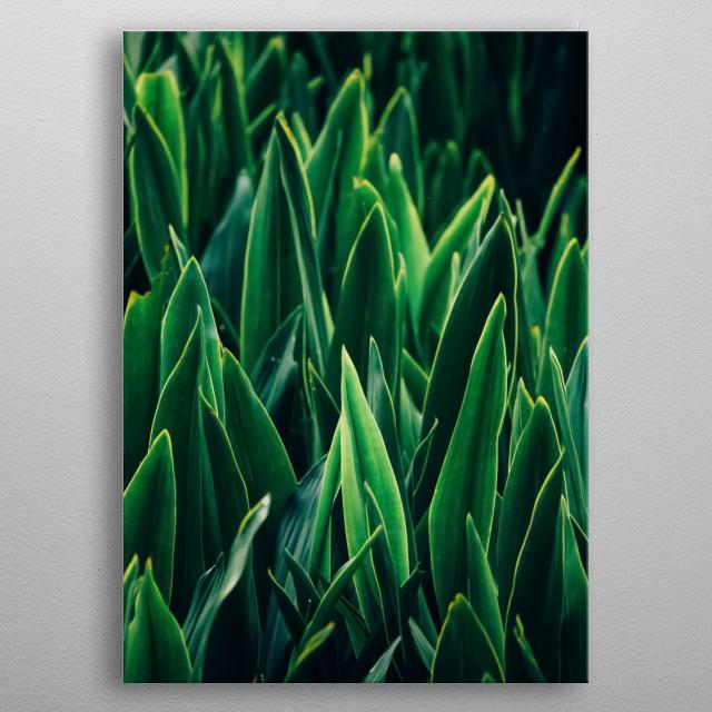 Plants 61 metal poster