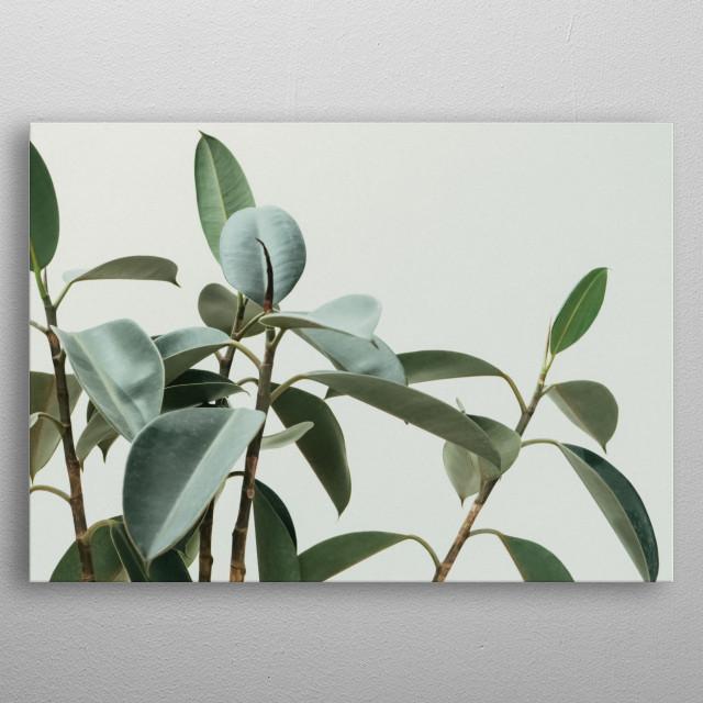 Plants 54 metal poster