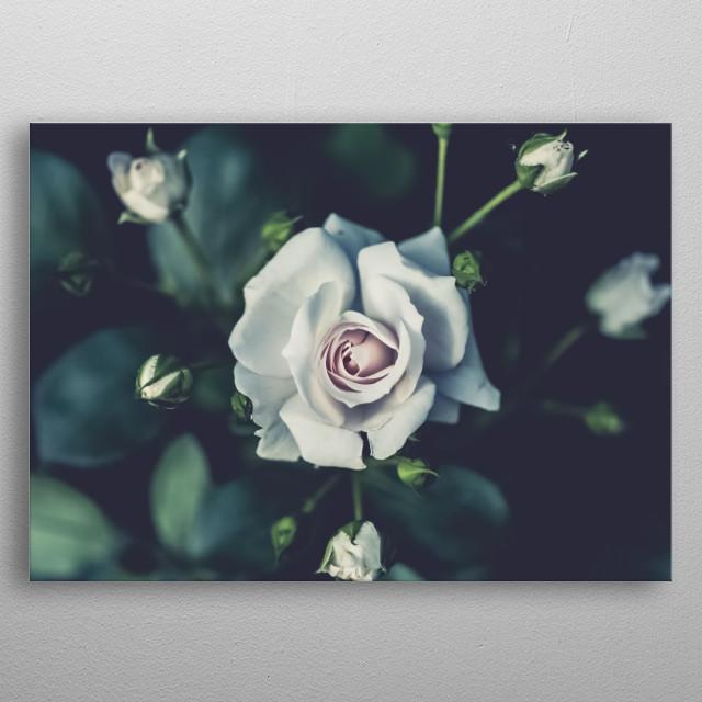 Flowers 142 metal poster