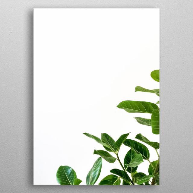 Plants 68 metal poster